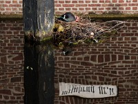 Photography Tours in Leiden 9